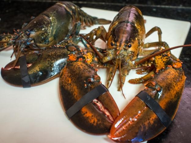 Dead Lobster Walking
